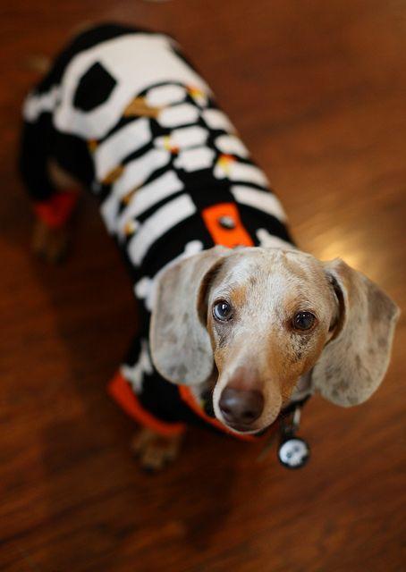 Dachshund halloween pjs by LittlePumpkinsPhotography, via Flickr