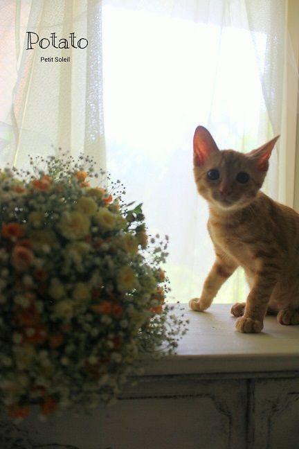 茶トラ子猫    red tabby cat  Kitten