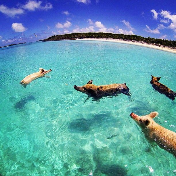 Bahamas Beach: 10 Best Bahamian Sayings Images On Pinterest