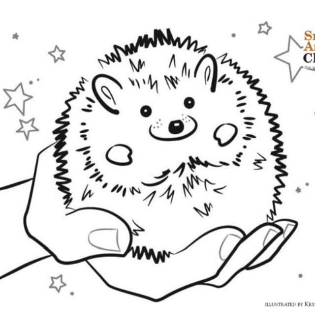 Hedgehog Coloring Page Baby Hedgehog Coloring Pages Animal Coloring Pages