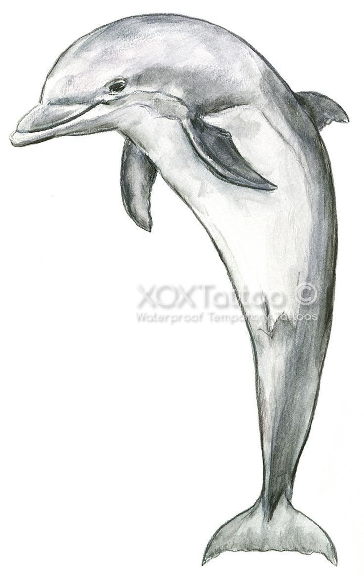 Dolphin Henna Tattoo: Dolphin Waterproof Temporary Tattoos (With Images