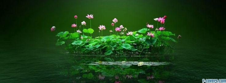 flowers-nature-13-facebook-cover-timeline-banner-for-fb.jpg (850×314)