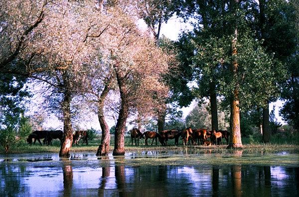 Danube Delta , Romania.