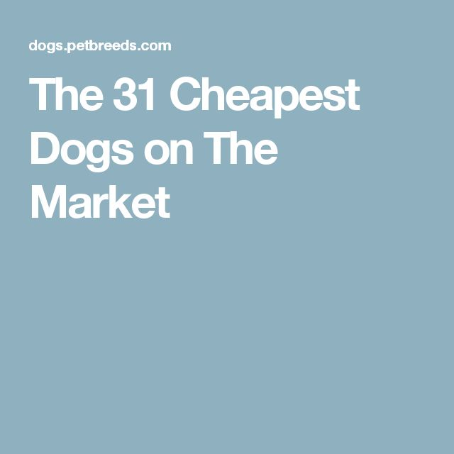 The 31 Cheapest Dogs on The Market