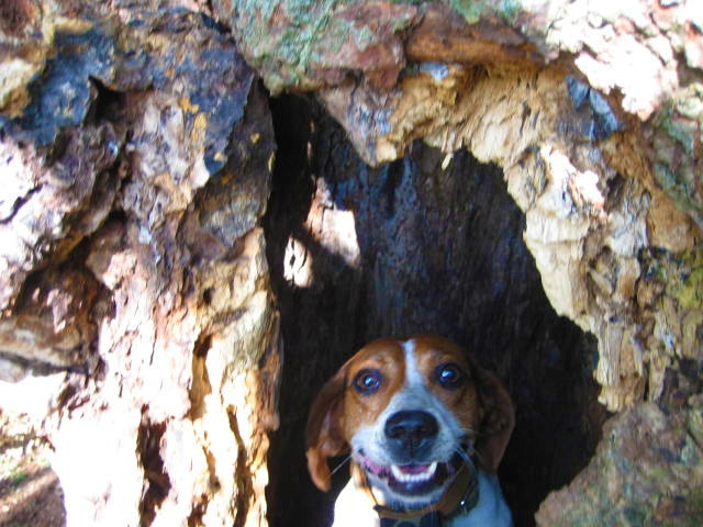 Ella, inside the tree