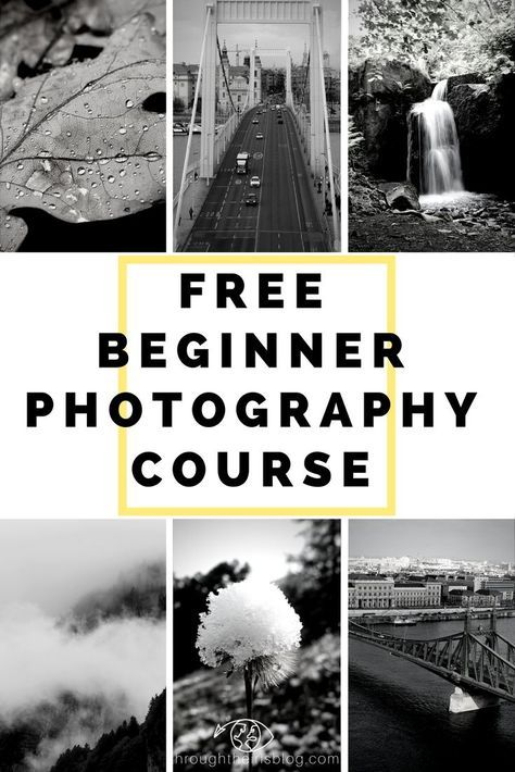 Free Beginner Photography Course | 5 week email course to learn about 5 essential photography tools | #photographytips #photographycourses #freecourse