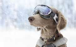 havazás tél kutya