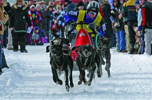 10th Annual Cannington Dog Sled Races and Winter Festival - January 25 - 26 2014, Cannington, ON. Get tickets at: http://www.ticketscene.ca/series/182/