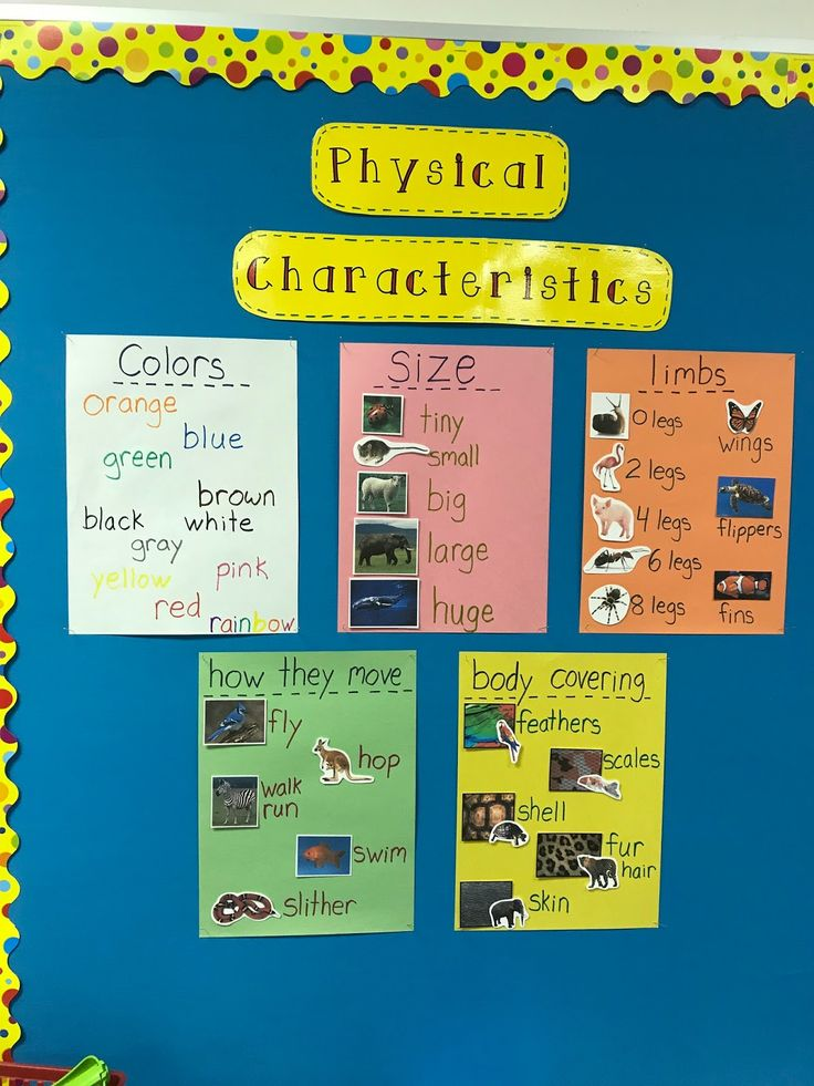 Classroom Zoo Project, Studying Animal Characteristics