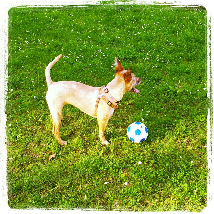 Fiona with the ball