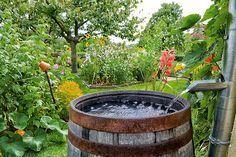 Günstig gärtnern: 10 Tipps für kleine Budgets