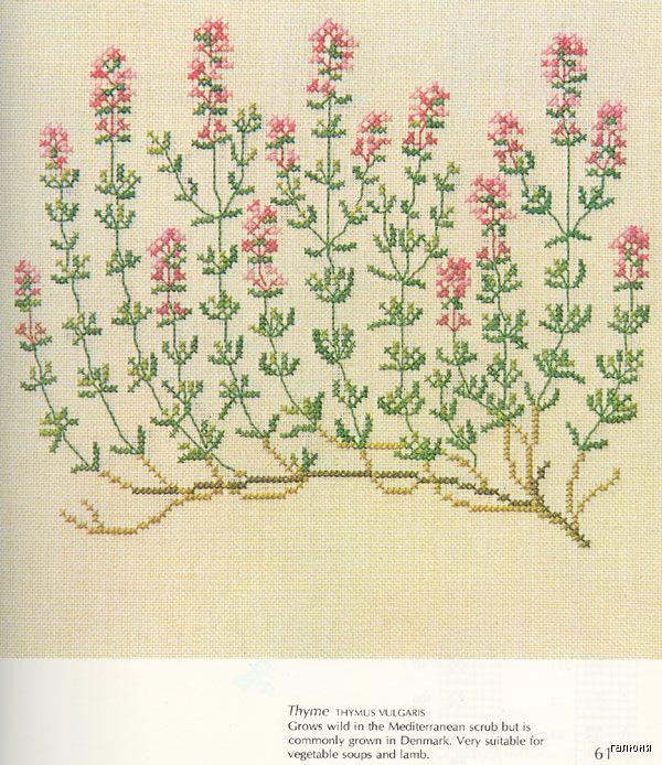 Gallery.ru / Фото #52 - Medicinal Plants - Mosca