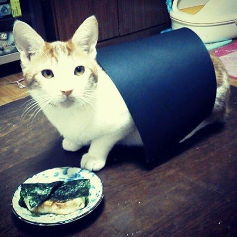 🐈 ・ 初めて迎える正月。海苔もちのコスプレをさせてみました。 ・ ・ セ:「たかし、もしかしておれを食べる気なのか…」 ・ ・ #猫 #保護  #保護猫 #元野良猫 #愛猫 #セルちゃん #茶トラ白 #茶トラ #ねこ #ねこ部 #ねこら部 #ねこすたぐらむ #cat #cats #mycat#catstagram #catsofinstagram #instacat #catlover #kitten #海苔餅 #コスプレ #同じ配色 #磯辺餅