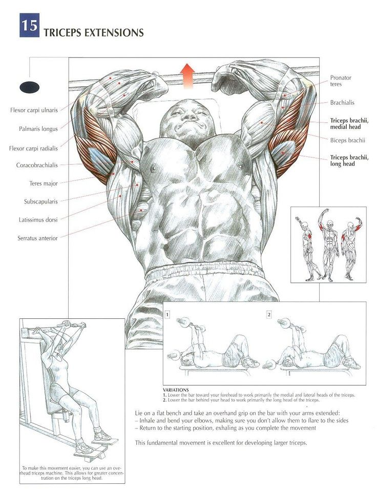 Tricep Extensions - AKA Skull Crushers...incline or flat bench can be used