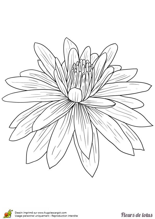 1000 Id Es Sur Le Th Me Dessins De Fleurs De Lotus Sur Pinterest Tatouages De Fleur De Lotus