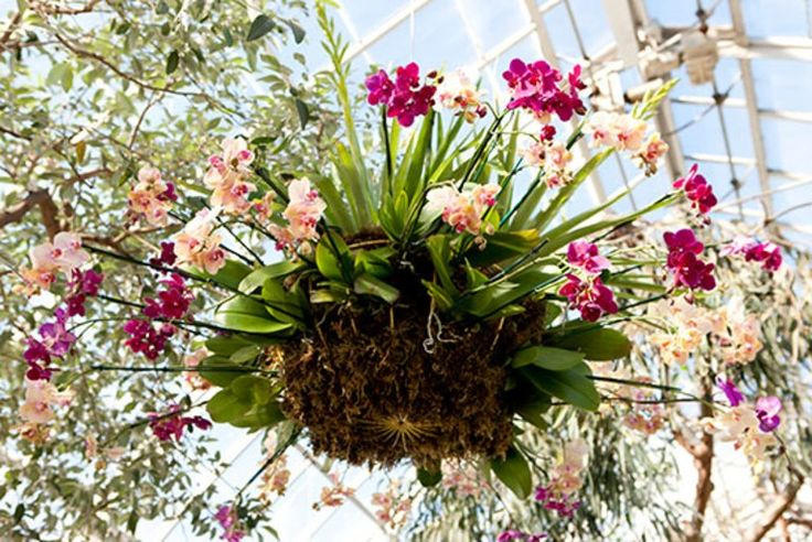 Living Chandeliers Are the Highlight of NYBG's Orchid Show | Architectural Digest