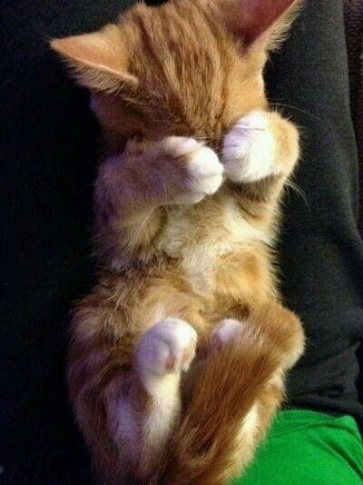 Awwww ... sooo cute! :)
