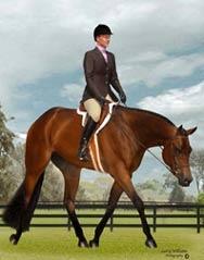 hunter under saddle <3