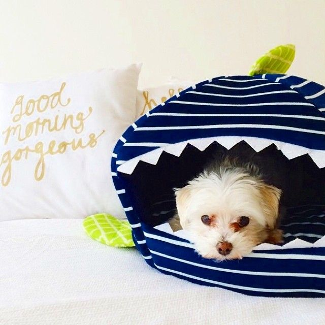 In honor of #sharkweek, Jameson the Maltese snuggles in his #marthastewartpets Shark bed. Thank you for the photo @sparkleandpopblog.Sharks Dogs, Dogs House, Pets Sharks, Marthastewart Sharks, Sharks Beds, Marthastewartpet Sharks