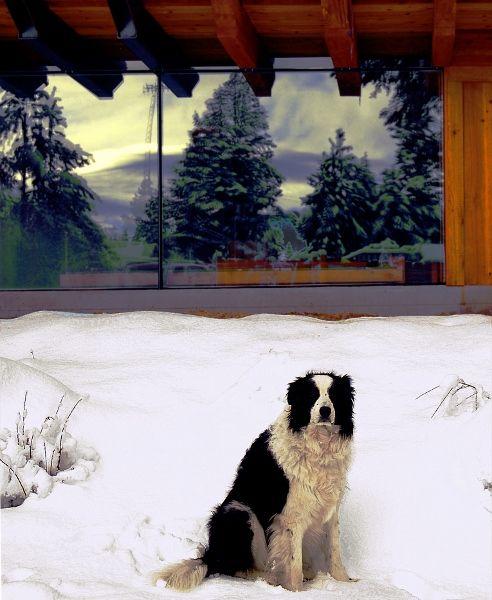 Dog Friendly Hotels In Yosemite Area