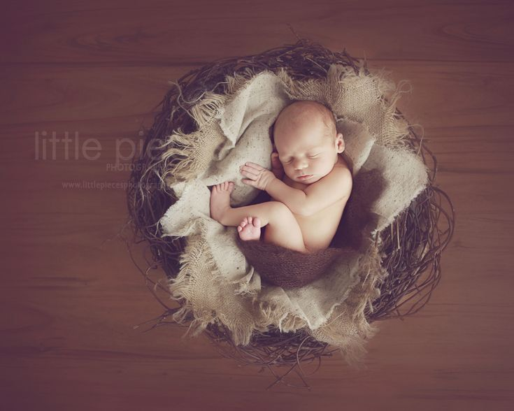 Newborn Photography Props Brisbane