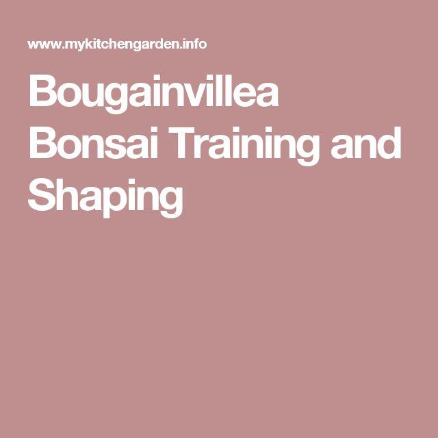 Bougainvillea Bonsai Training and Shaping