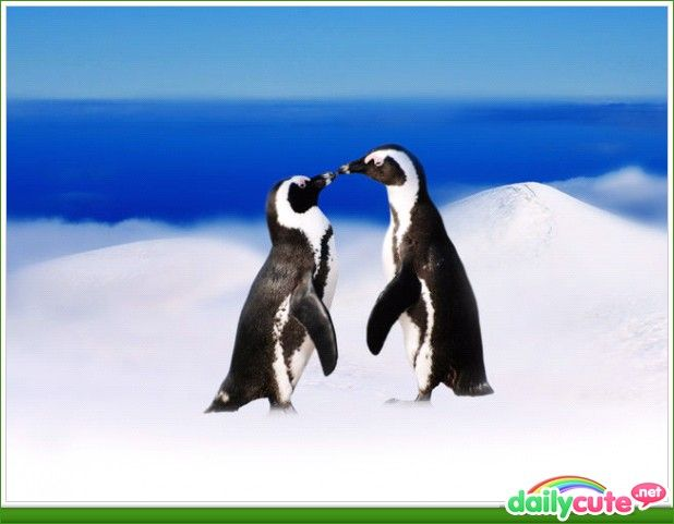 love: Fun Penguins, Fluffy Penguins, Artic Animals, Ice, Fav Penguins, 000, Penguins Polar Bears, Heart Penguins, Lovable Animals