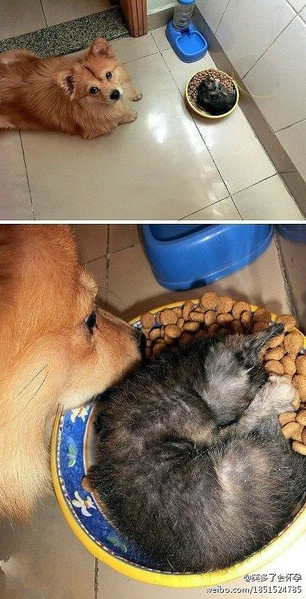 I'll just eat around the kitty...