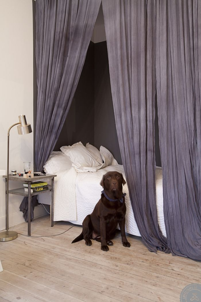 I style all my homes with a chocolate lab the perfect addition for my home ❤️