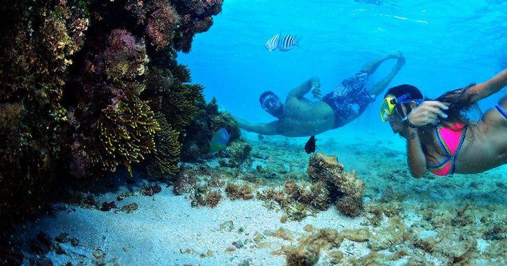 Descubra o nordeste no Salinas Maragogi All Inclusive Resort ou Salinas Maceió All Inclusive Resort.