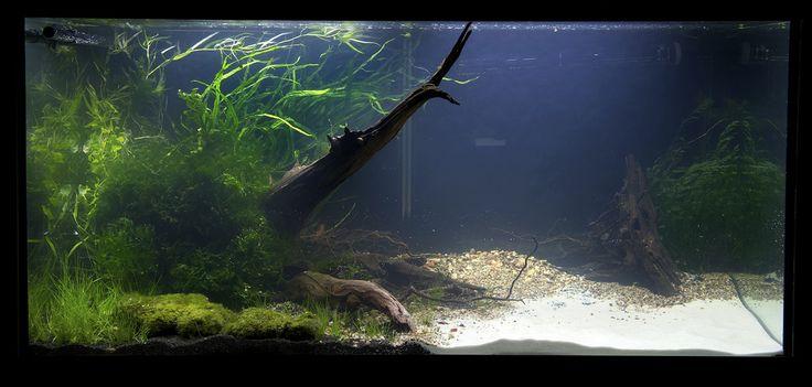 Die besten 17 bilder zu aquariums auf pinterest unter for Zierfische hannover