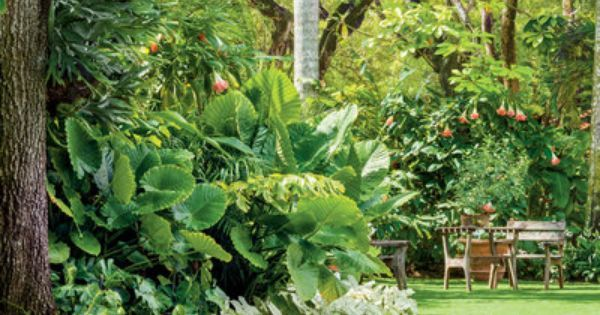 The Lawn - Magnificent Miami Garden | Coral Gables, Lawn and Tropical