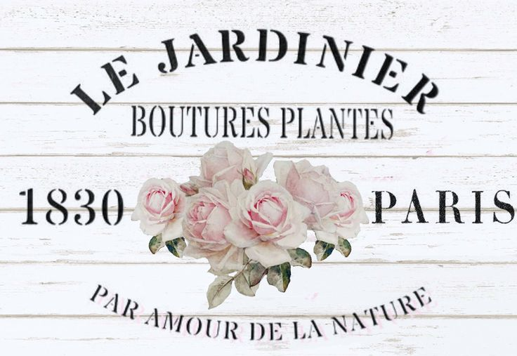Paris Vintage roses
