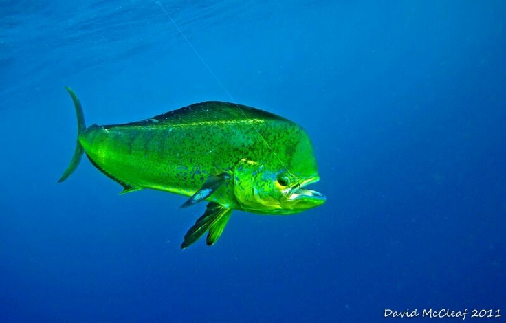 Mahi mahi 1776 princess anne rd virginia beach virginia for Fish store virginia beach