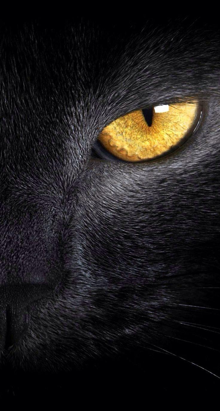 картинки глаз черной кошки рецептов сочных