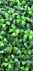http://sendplantbusiness.jigsy.com/  Web Site For Send A Plant,  The history of Tropical Plants To buy. How you can Solve the Greatest Issues With Buy Plants Online.