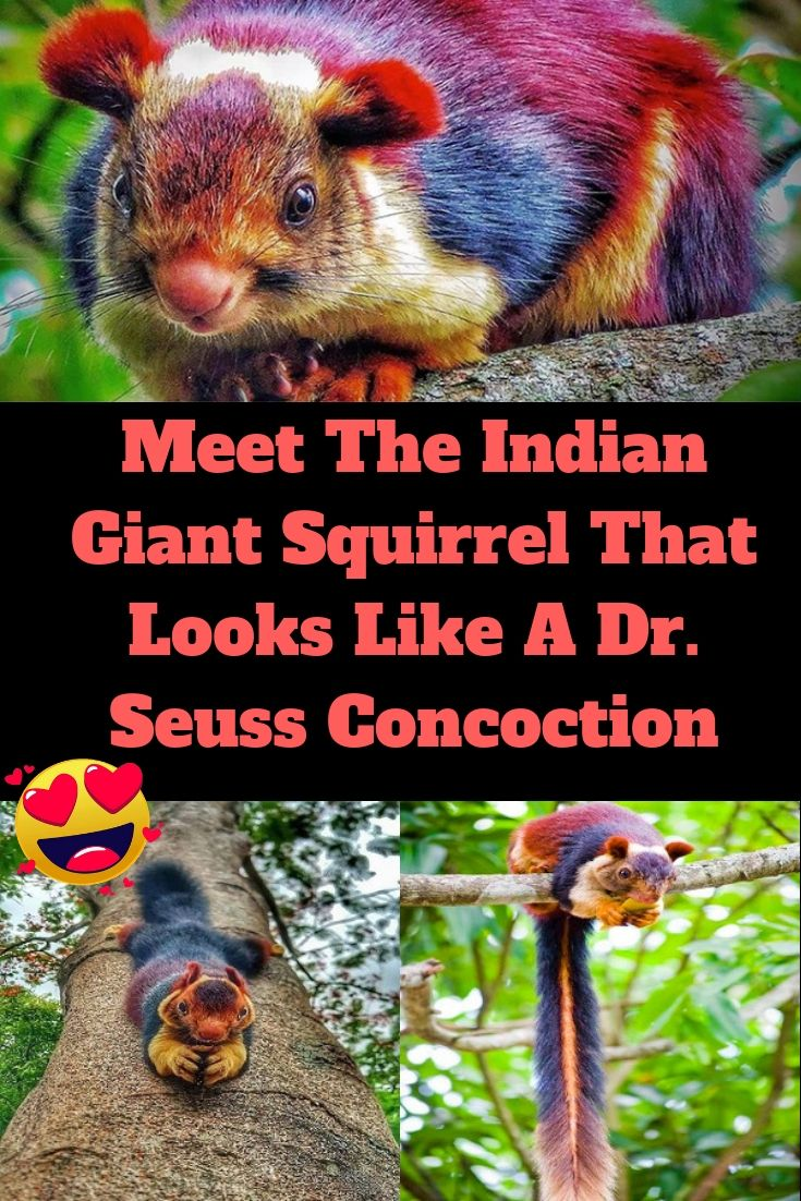 These Huge Multicolored Squirrels Look Like They Re From A Dr Seuss Book With Images Majestic Animals Animals Beautiful Pet Birds