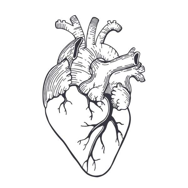 Heart In 2020 Anatomical Heart Drawing Anatomical Heart Heart
