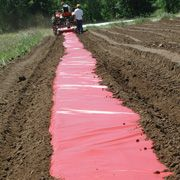 Plastic & Paper Mulches - Red Plastic Mulch for earlier and increased tomato yields