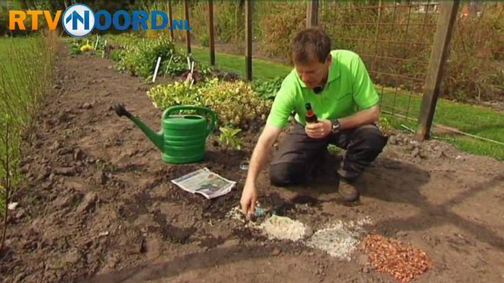 De Tuindokter: Slakken in de tuin. + Oma's tip tegen slakken: leg 's avonds natte kranten neer en verwijder die 's ochtends met de slakken die eronder zijn gekropen.