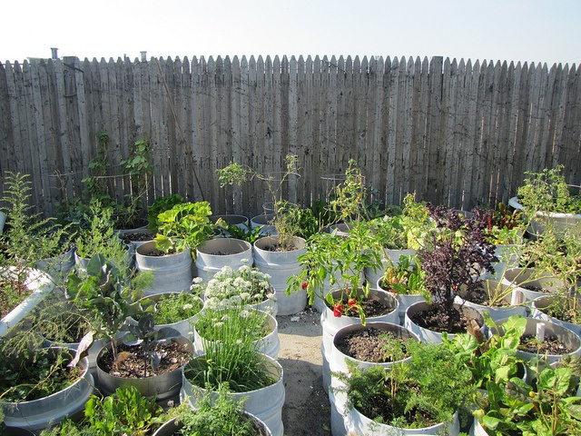 A rooftop garden atop a brewery in New York City