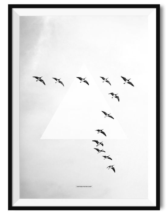 ANOTHER POSTER SHOP - FLY AWAY - BIRDS A3 POSTER