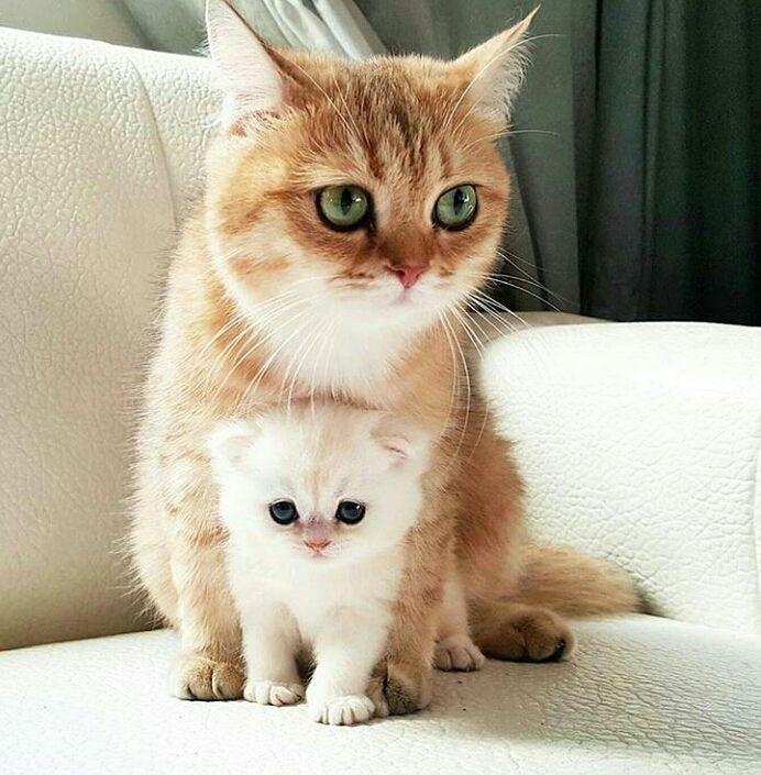 Ordene su gimnasio de gatos hoy mismo y reciba descuento del 10% whatsapp 320 9767871 #gatosdebogota #gatosbogotanos #veterinariabogota #mueblesparagatos #repisasparagatos #rascadores #gimnasiosparagatos #catification #catlover #cat #gato #bogota no olvides visitarnos en facebook https://goo.gl/SoxhHJ #gatosbuenavida #gatosbonnevie #catbonnevie