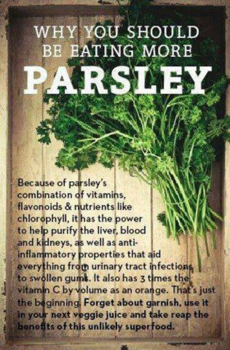 Parsley~This herb promotes energy and improves blood circulation. It is good for the stomach, fights kidney infections, bladder ailments, flatulence, and help with bad breath or even anemia. Is also a diuretic. It has to be replanted every two years since it is a biennial.It also helps you not absorb water weight :)