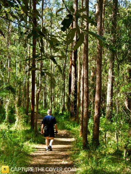 Daisy Hill Conservation Park #CaptureTheCover entry by Diane in Brisbane's Logan City, Beenleigh Region. Click to enter.