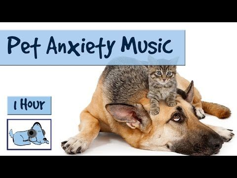 "5 Hours of ""Anxiety Prevention"" Music for Dogs and Pets. Fireworks and Storms - Problem Solved! - YouTube"