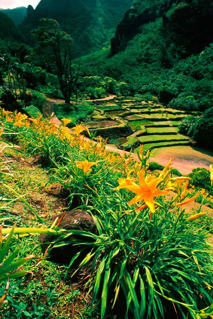 Natural botanical garden Kauai,  HI