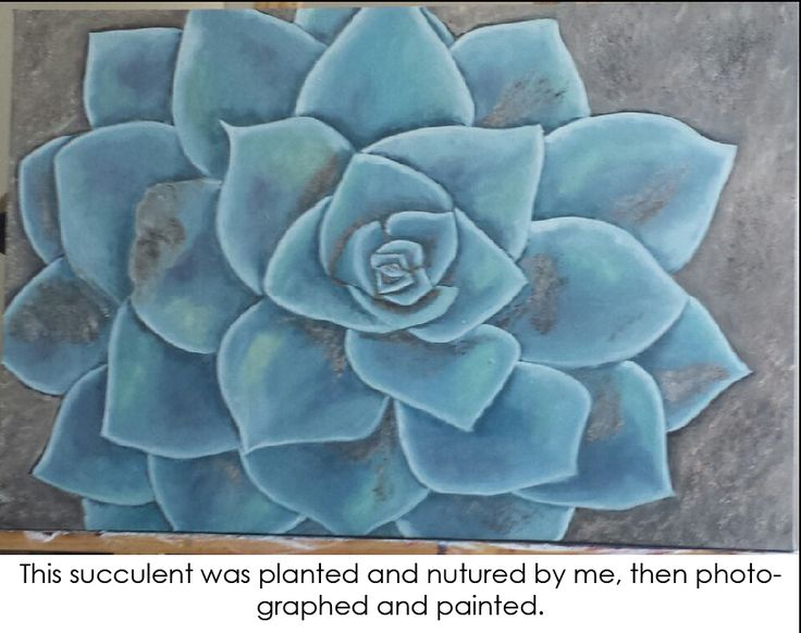 An oil painting of a succulent that grew in my garden.