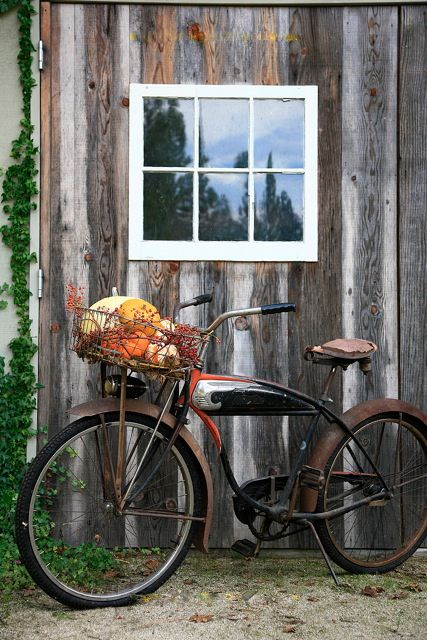 awesome for fall decorating : )