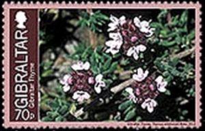 Gibraltar Thyme